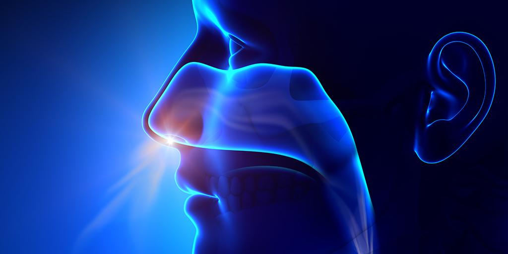 19º Curso de disección y anatomía quirúrgica de la fosa nasal, senos ...