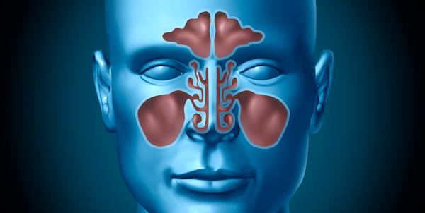 XIX Curso práctico de cirugía endoscópica nasosinusal