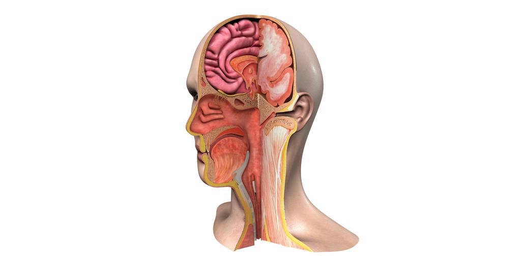 Disección y anatomía quirúrgica de la fosa nasal_SBORL