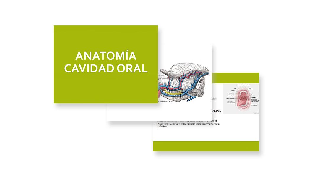 Anatomía cavidad oral y faringe | Miguel García Wagner