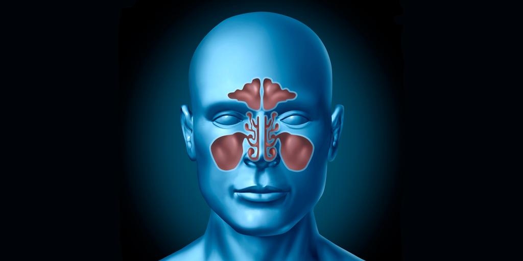 XI curso de disección anatomoquirúrgica de senos y fosas paranasales